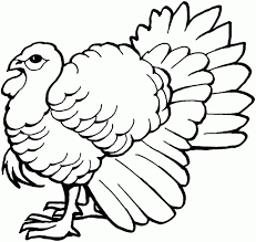 a drawing of a turkey how to draw a thanksgiving turkey step step