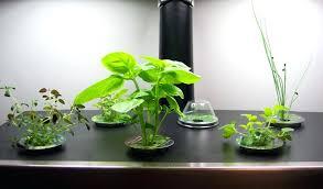 indoor herb gardens indoor kitchen herb gardens just in time for spring furniture