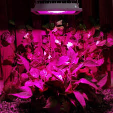 Low Light Flowering Plants by Compare Prices On Indoor Flowering Plants Low Light Online