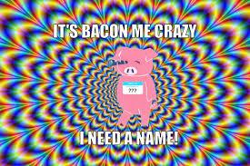 Bacon Memes - bacon memes bacon scouts