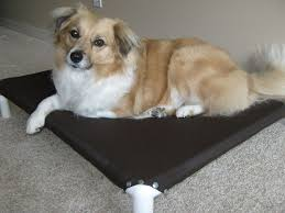 Elevated Dog Beds For Large Dogs Diy U2013 How To Make No Sew Elevated Dog Beds Out Of Pvc Pipes