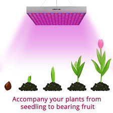 plants that don t need light 100 office plants that don t need sunlight low maintenance