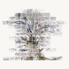 sketch film of a tree by noel myles buy pictures u0026 photo art