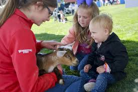 baby chickens pigs and goats oh my lehi news heraldextra