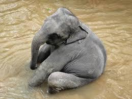 an elephant a day 2 0 elephant no 19 graphitint pencils