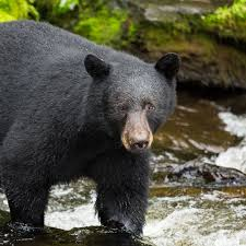 Alaska wild animals images Meet the wildlife of wild alaska live pbs jpg