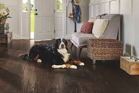 Best Flooring For Pets Pet Friendly Flooring Paragon Sakp59l403h Jpg