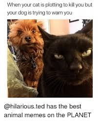 Best Animal Memes - when your cat is plotting to kill you but your dog is trying to warn