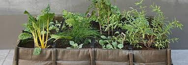 gem se pflanzen balkon bacsac mit gemuese jpg