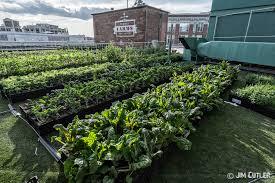 fenway park u0027s rooftop vegetable garden