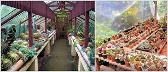 Cactus Garden Ideas 13 Beautiful Cactus Garden Ideas