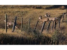 North Dakota wildlife images View north dakota 39 s wondrous wildlife official north dakota jpg