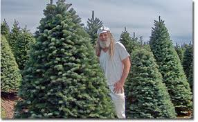 wholesale christmas trees by the truckload from a family run