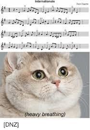 Cat Heavy Breathing Meme - internationale pierre degeyter d7 heavy breathing dnz heavy