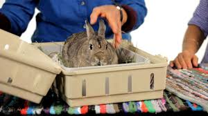 can you keep a wild rabbit as a pet howcast the best how to
