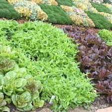Fall Vegetable Garden Ideas Southern California Gardening Fall Vegetables
