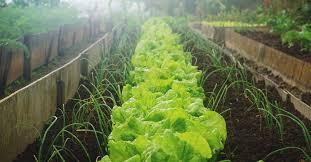 Veg Garden Ideas 19 Vegetable Garden Plans Layout Ideas That Will Inspire You