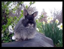 149 best rabbitry images on pinterest bunnies rabbits and bunny