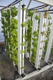 Harmony Silverline Greenhouse 314 Best 8 Green Tech Images On Pinterest Hydroponic Gardening