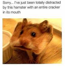 Cat Memes Generator - 25 best memes about cat meme generator cat meme generator memes
