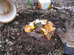 Mulching Vegetable Garden by Low Cost Vegetable Garden Kitchen Scraps U0026 Raccoons