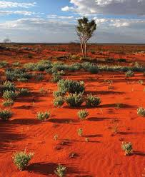 old spinifex rings little sandy desert australia wallpapers 109 best australian plants images on pinterest native gardens