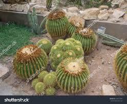 native desert plants living desert zoo gardens state park stock photo 241975957