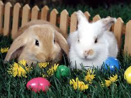 bunnies for easter baby easter bunny happy easter 2018
