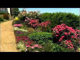 the best site for your rose garden youtube