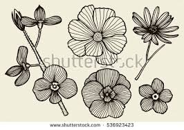 hand drawn flowers stock images royalty free images u0026 vectors