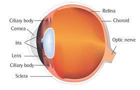 Anatomy Of The Eye Datta Netralaya