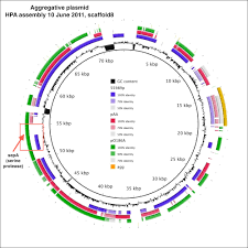 Genome Mapping Aggregative Plasmid U2013 New E Coli Genome From Hpa Bacpathgenomics