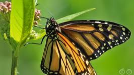 what does a butterfly eat by happylearning fawesome tv