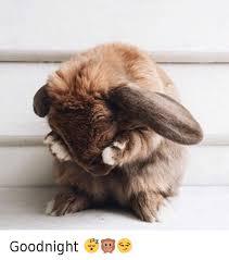 Goodnight Meme Cute - goodnight animals meme on sizzle