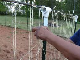 hand stringing our bean trellis with jute twine string whatever
