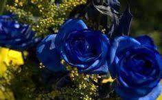 Blue Roses For Sale 34 Best Beautiful Blue Rose Images On Pinterest Blue Roses Blue