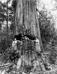 Washington Forest images Early logging photos show the taming and tarnishing of jpeg