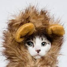 Cat Halloween Costumes Cats Cat Halloween Costumes Cutest Pet Costumes Cool Stuff Cats
