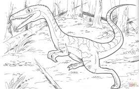 coelophysis bauri dinosaur coloring page free printable coloring