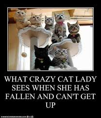Crazy Cat Lady Memes - crazy cat lady meme by lizzy22370 memedroid
