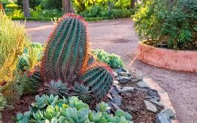 Cactus Garden Ideas 15 Cactus Garden Ideas Photos Garden Club
