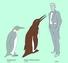 penguin fossil shows that penguins diversified earlier than