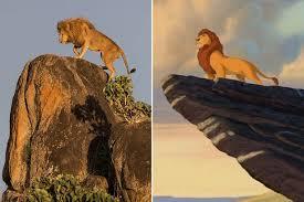 lion king amazing images u0027mufasa u0027 recreates famous