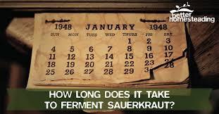 how long to ferment sauerkraut tips for the utterly bewildered