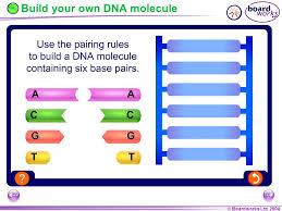 chromosomes genes and dna ppt video online download