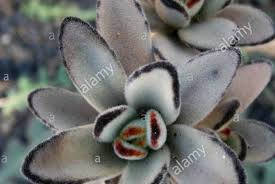 succulent facts bedding set grey cats beautiful grey yellow bedding 13 facts