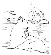 california sea lion coloring