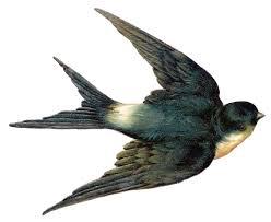 Barn Swallow Tattoo Designs Vintage Clip Art Bird Best Swallow Ever Swallows Google