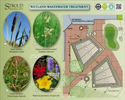 native wetland plants wetland plants stroud water research center