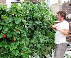Aeroponic Vertical Garden Chef John Mooney Future Growing Llc